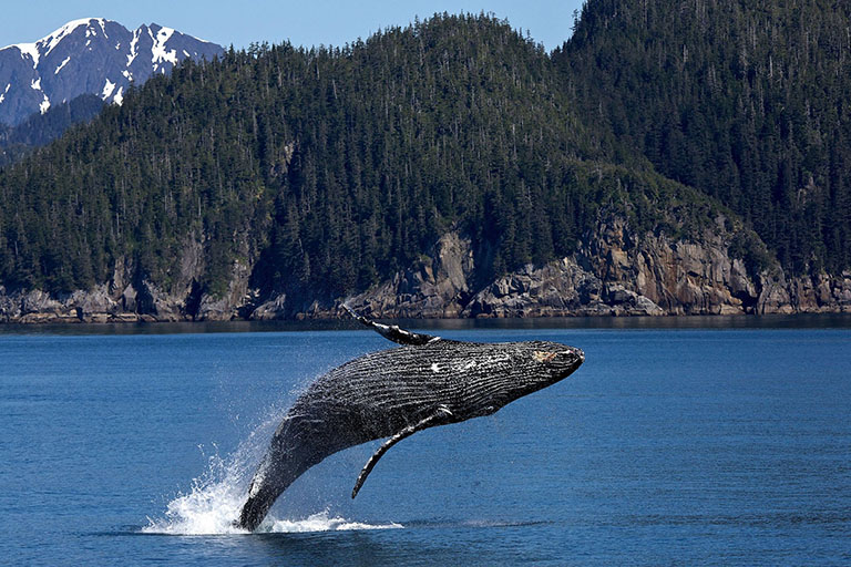 Canada - Vancouver Island - Tofino Whale-Watching