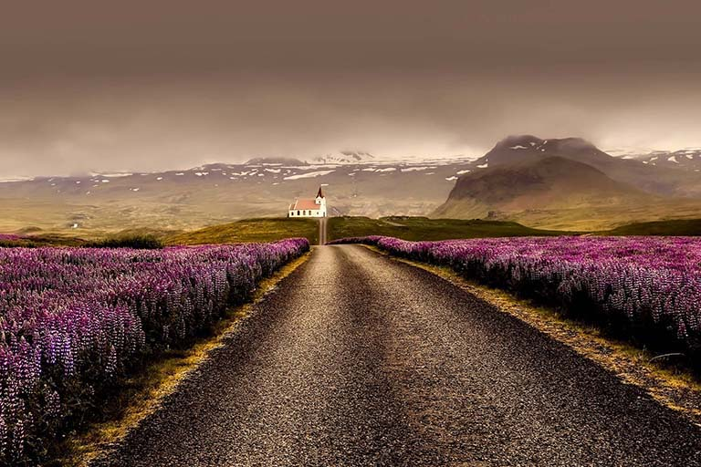 Iceland - Landscape Church Lupins