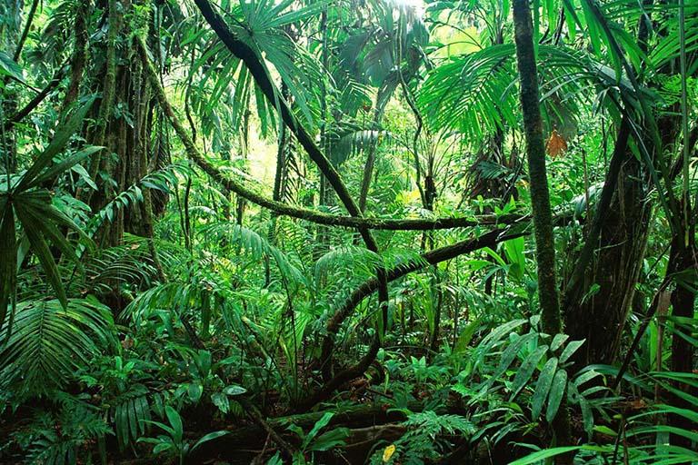 Peru - Amazon Rain Forest