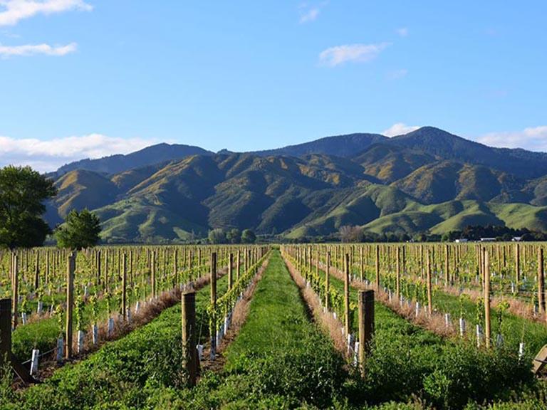 New Zealand - Marlborough Vineyards