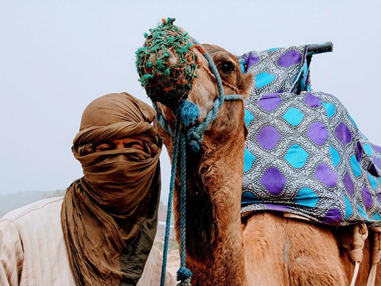 Morocco - Berber Tribe Camel