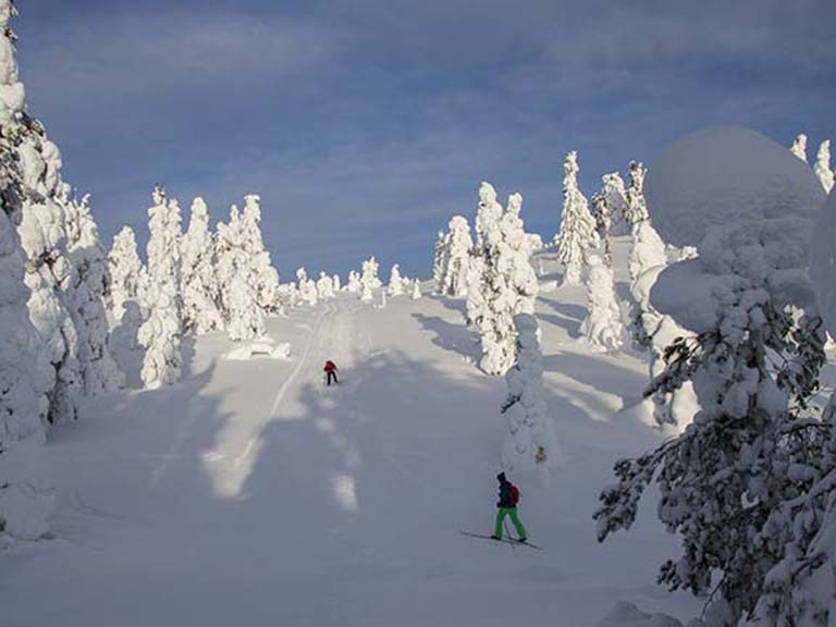 Lapland - Skiing Activity
