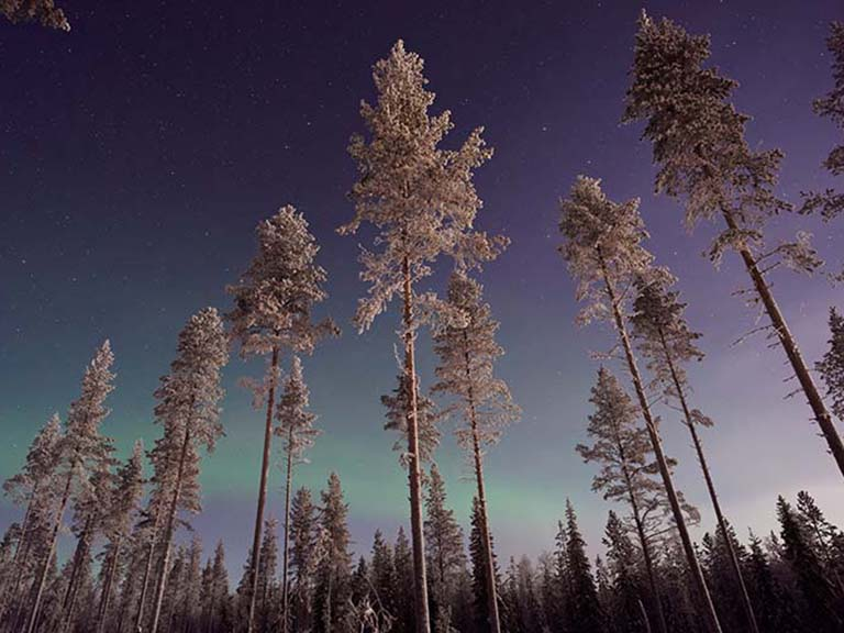 Lapland - Northern Lights Forest